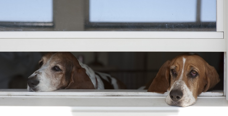 Dogs look out open window with no window covering in Gainesville.